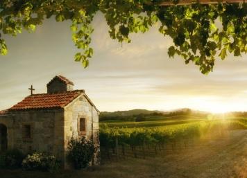 Romantic Vineyards